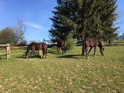 Wir haben 3 Pferdeboxen in