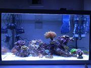 Meerwasseraquarium Meerwasser Aquarium Salzwasser
