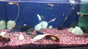 45 Liter Aquarium Fische Zubehör