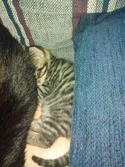 Mutterkatze mit 2 Babys Erstgeborenen