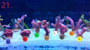 Meerwasser Korallen Ableger ab 2 -