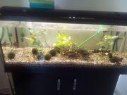 Biete Aquarium Komplett