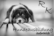 Hundetrainer Problembehandlung