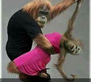 Tanzpartner Discofox gesucht