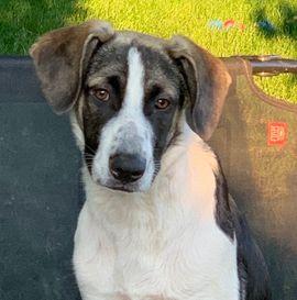 Hunde - Juve 11 Monate süßer Rüde