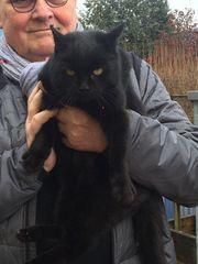 schwarze weibliche Katze zugelaufen Unter-Weilersbach