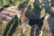 Tino Rüde aus dem Tierschutz
