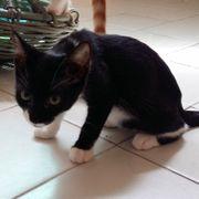 Kätzchen Ilenia sucht ihre Menschen