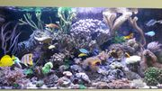 Meerwasser Korallen Ableger günstig abzugeben