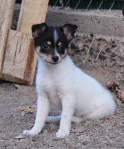 Quetchua-Hundekind aus dem Tierschutz