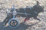Betreuung Reha für benachteiligter Tiere -
