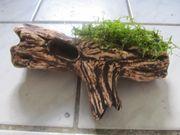Verkaufe bepflanzten Baumast