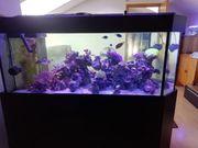 Aquarium Raumteiler ca 560 Liter