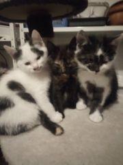 Junge Katzenbabys
