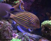 Meerwasser Fische