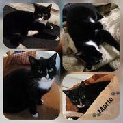 Wunderschöne Handycap Katze Marie 1