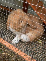 Kaninchenpärchen sucht neues Zuhause
