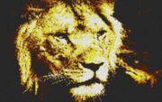 Vorlage für Ministeck Lion 80x60cm