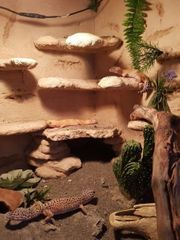 Reserviert für DS Leopardgeckos Gruppe