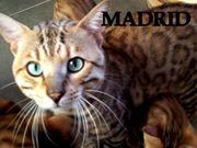 Madrid und Honey gehen in