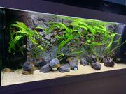 Juwel Aquarium Weiß Rio LED