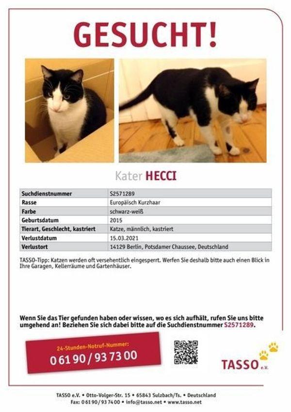 Katze vermisst in Zehlendorf Steglitz