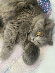 BLK Kitten