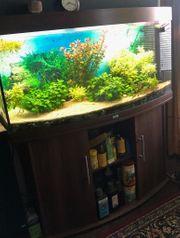 Aquarium Juwel Vision 260 mit