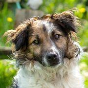 Vitello 10 Monate - Mischling - Tierhilfe