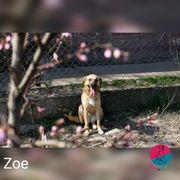 Zoe- Aller Anfang ist schwer
