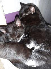 Zwei Katzen in liebevolle Hände