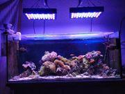 Meerwasser Aquarium 120cm 250l