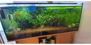 Aquarium 240 l mit Unterschrank