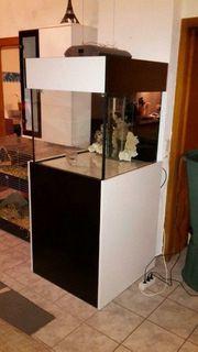 meerwasseraquarium 70x70x60 mit unterbau