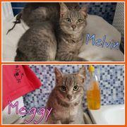 Meggy und Melvin suchen ein