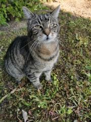 Katze Garfield wird vermisst