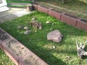 Wir nehmen kostenlos Landschildkröten auf
