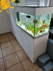 Aquarium ca 240 Liter Raumteiler