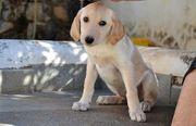 Milo - Der süße Hundejunge wartet