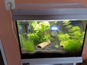 Aquarium 20 l von Tetra