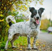 Kleiner und fröhlicher Mischling Timmi