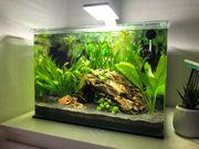 Komplettes Aquarium von BLAU mit