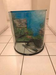 Aquarium 60 l mit Schrank