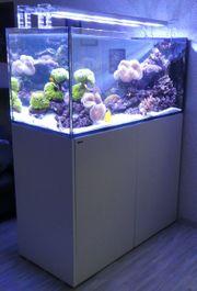 Meerwasseraquarium als Raumteiler komplett