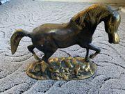 Pferde Statur abzugeben