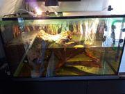 Wasserschildkröten Aquarium mit Landteil 110x50x56cm
