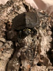 schildkröten mit zubehör