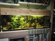 Verkaufe schönes 375 Liter Aquarium