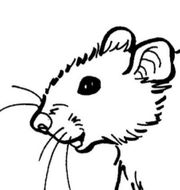 Ratten