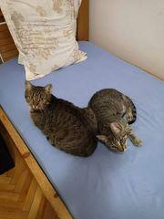Katzendame Nugget und Katzenbub Moritz